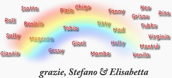 Nome di cani nomi maschili per cani idee suggerimenti for Nomi per tartarughe femmine